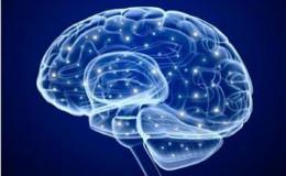 美国俄亥俄州立大学科学家培养皿中培育出完整婴儿大脑